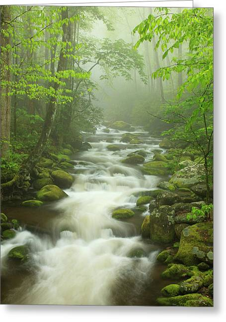 Usa, Tennessee, Stream In The Fog Greeting Card by Joanne Wells
