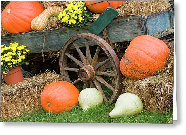 Usa, Tennessee, Townsend Greeting Card by Jaynes Gallery