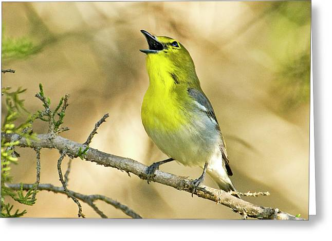 Usa, Texas, Balcones Canyon Nwr Greeting Card by Jaynes Gallery