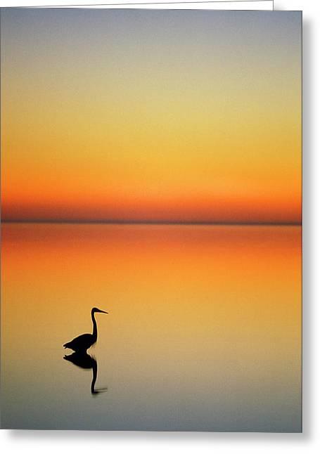 Usa, Texas, Port Aransas, Great Blue Greeting Card