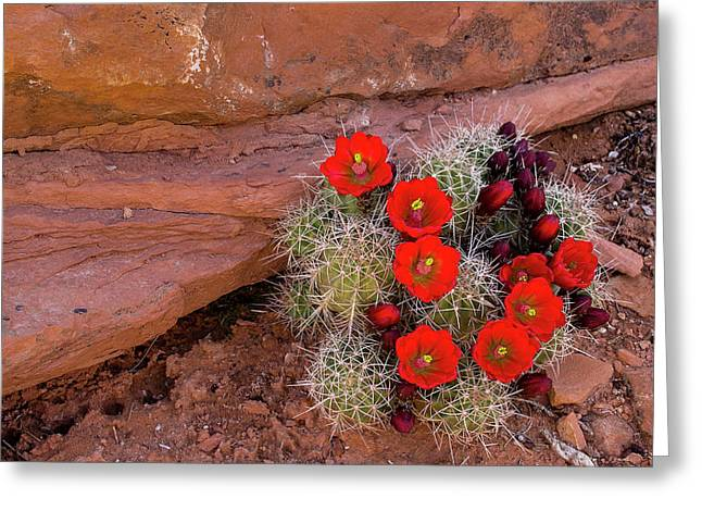 Usa, Utah, Cedar Mesa Greeting Card by Charles Crust