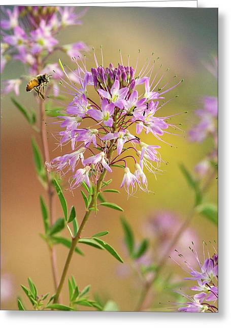 Usa, Utah Honey Bee Landing On Mountain Greeting Card by Jaynes Gallery