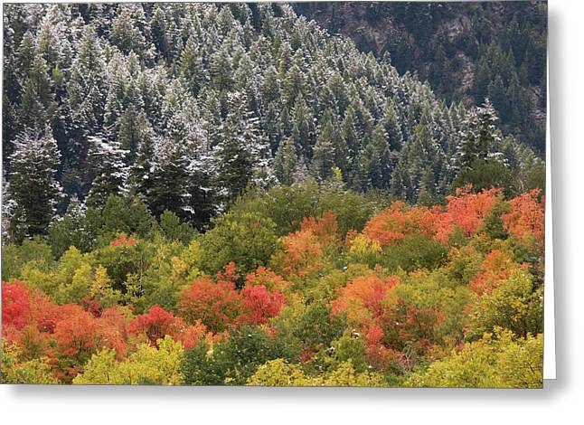 Usa, Utah, Little Cottonwood Canyon Greeting Card by Jaynes Gallery