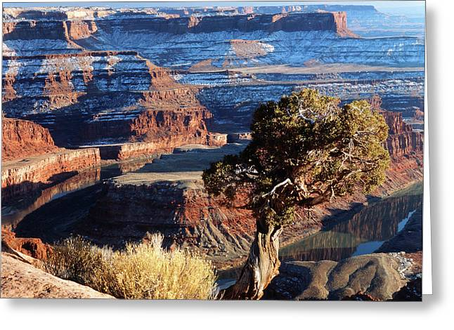 Usa, Utah, View Of Dead Horse Point Greeting Card