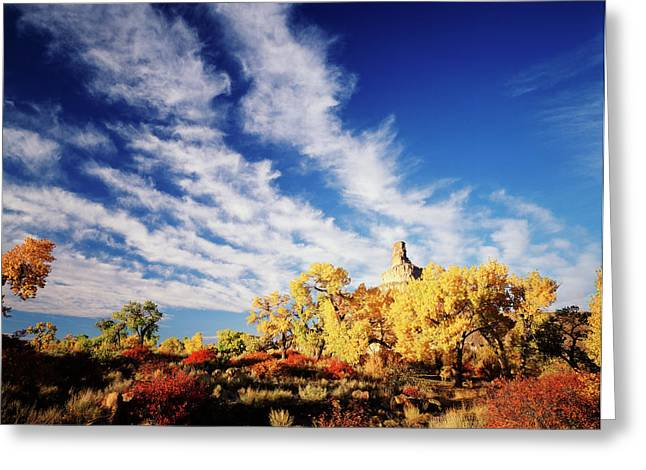 Usa, Utah, View Of Rabbit Brush Greeting Card