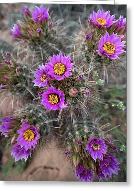 Usa, Utah Whipples Fishook Cactus Greeting Card