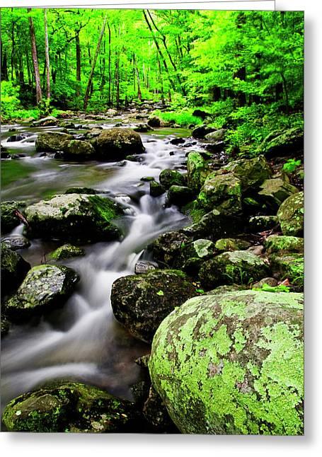 Usa, Virginia, Shenandoah National Park Greeting Card by Jaynes Gallery