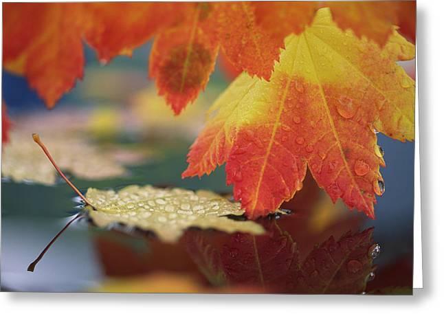 Usa, Washington, Bellingham, Close-up Greeting Card
