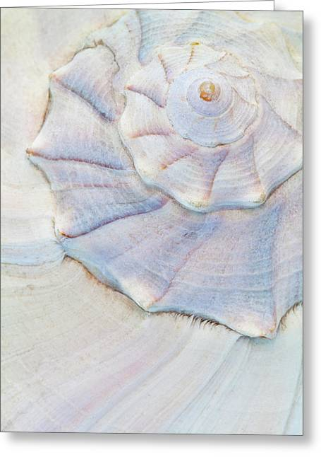 Usa, Washington Close-up Of Pastel Greeting Card by Jaynes Gallery