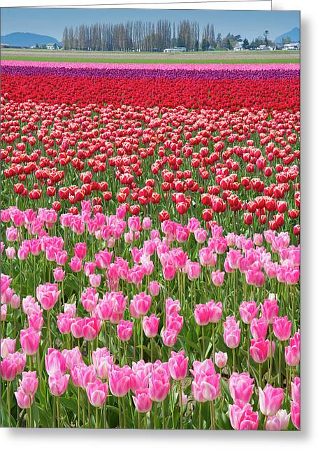 Usa, Washington Field Of Multicolored Greeting Card by Jaynes Gallery