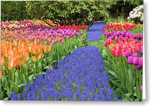 Usa, Washington Garden With Tulips Greeting Card