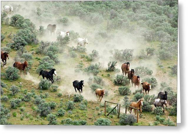 Usa, Washington, Malaga, Running Horses Greeting Card