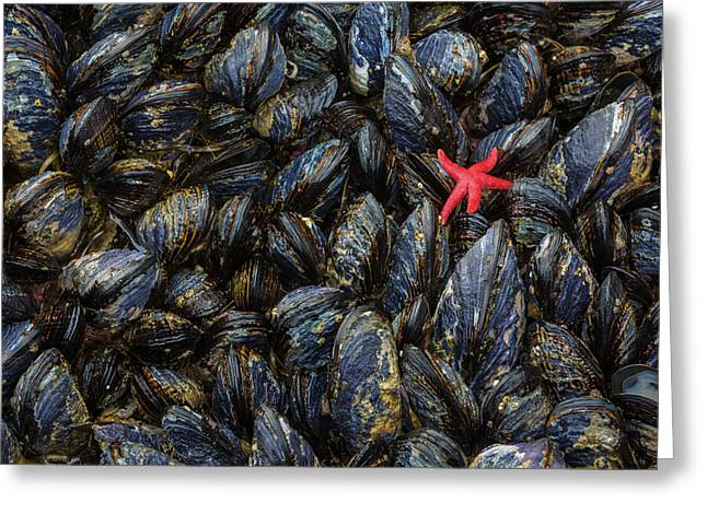 Usa, Washington Mussels And Red Sea Greeting Card by Jaynes Gallery