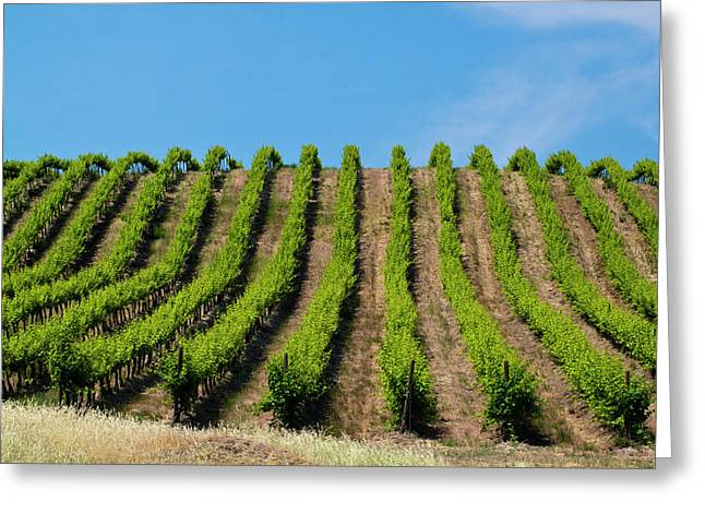 Usa, Washington, Rolling Vineyards Greeting Card