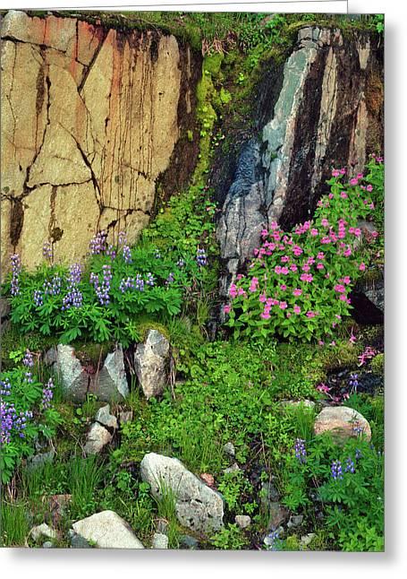 Usa, Washington State, Mount Rainier Greeting Card by Jaynes Gallery