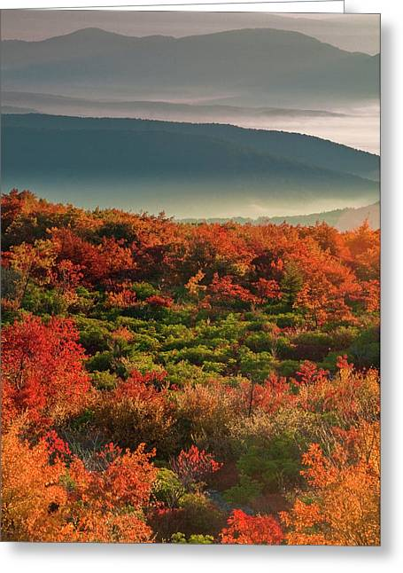 Usa, West Virginia, Dolly Sods Greeting Card