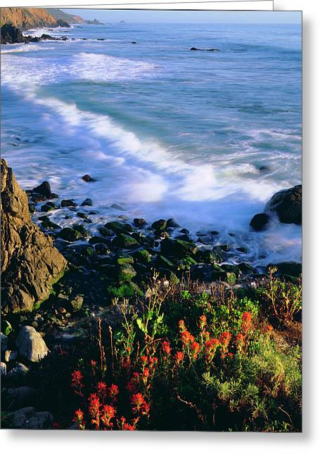 Usa, Wildflowers Along The California Greeting Card by Jaynes Gallery