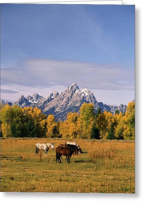 Usa, Wyoming, Horses In Grand Teton Greeting Card by Stuart Westmorland