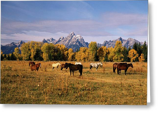 Usa, Wyoming, Horses On Moran Junction Greeting Card
