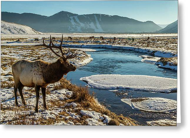 Usa, Wyoming, National Elk Refuge Greeting Card