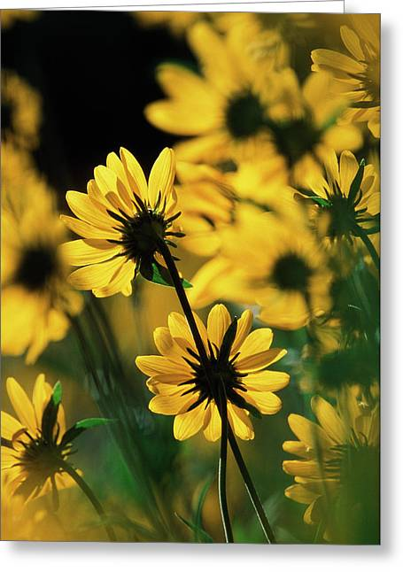 Usa, Wyoming, Sierra Madre Medicine Bow Greeting Card by Scott T. Smith