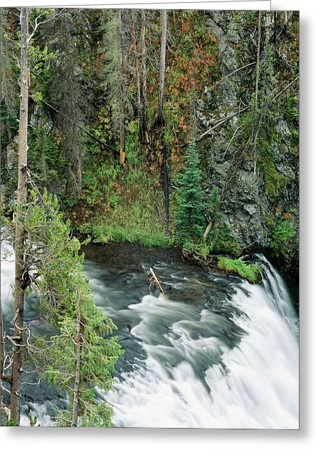 Usa, Wyoming, Yellowstone National Greeting Card by Scott T. Smith