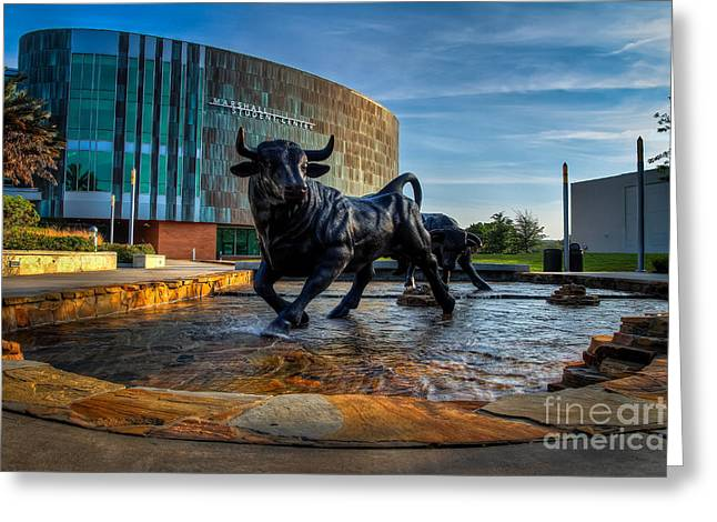 Usf Bulls Fountain Greeting Card by Karl Greeson