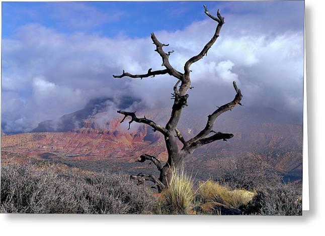 Utah Usa Pinyon Pine Snag Above Virgin Greeting Card by Scott T. Smith