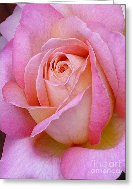 Valentine Pink Rose Bud Greeting Card by Paul Clinkunbroomer