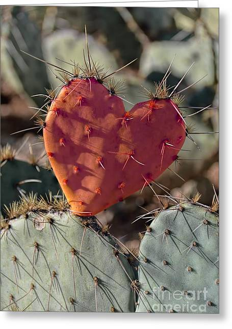 Valentine Prickly Pear Cactus Greeting Card by Henry Kowalski