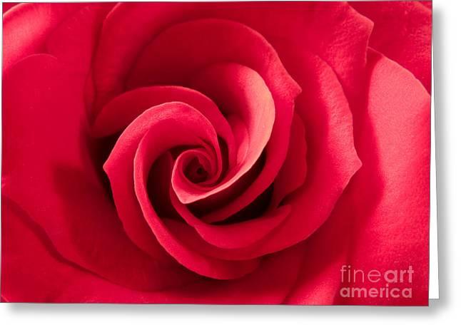 Valentine Red Rose Greeting Card