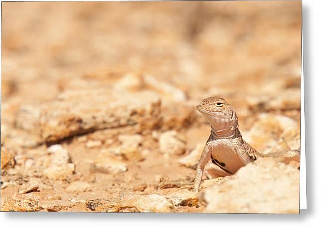 Valley Lizard Greeting Card