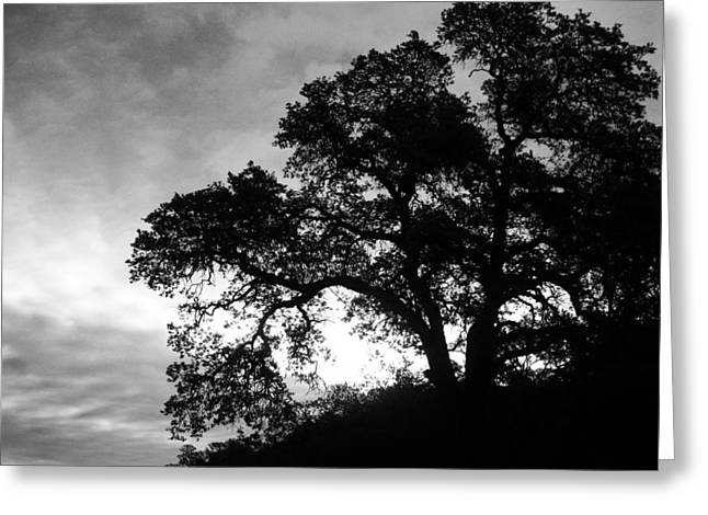 Greeting Card featuring the photograph Valley Oak by Jennifer Muller