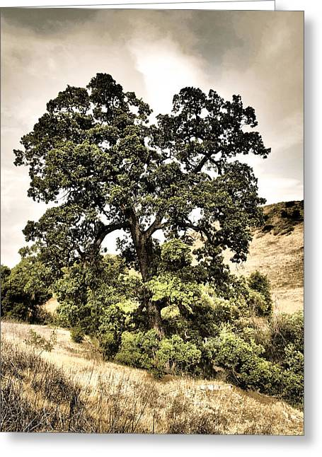 Valley Oak Greeting Card