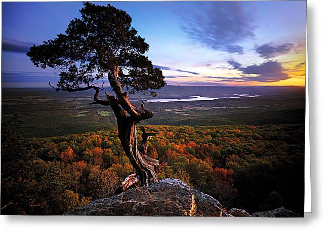 Valley Sentinel Greeting Card by Ed Cooley