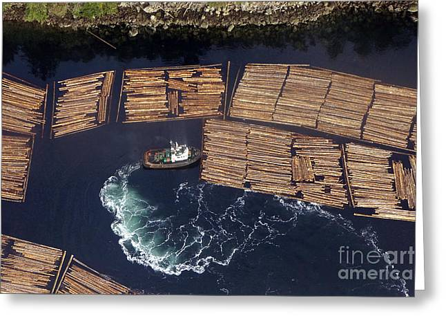 Vancouver Island Logging Greeting Card by Inge Riis McDonald