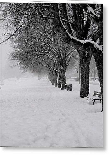 Vancouver Winter Trees Greeting Card