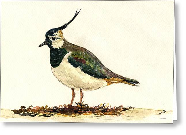 Vanellus Vanellus Greeting Card