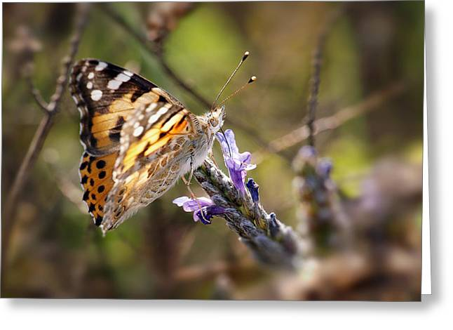 Greeting Card featuring the photograph Vanessa Cardui II by Meir Ezrachi