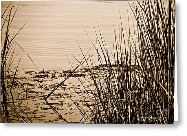 Vanishing  Greeting Card by Q's House of Art ArtandFinePhotography