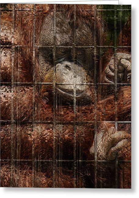Vanishing Cage Greeting Card by Jack Zulli