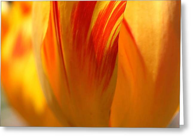 Variegated Tulip Greeting Card by  Andrea Lazar