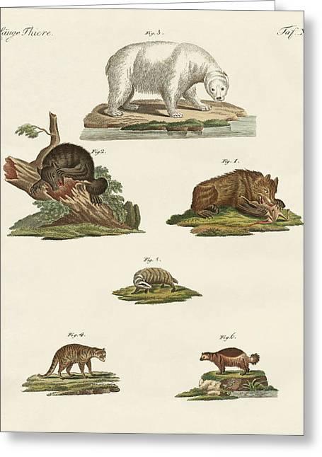Various Kinds Of Bears Greeting Card by Splendid Art Prints