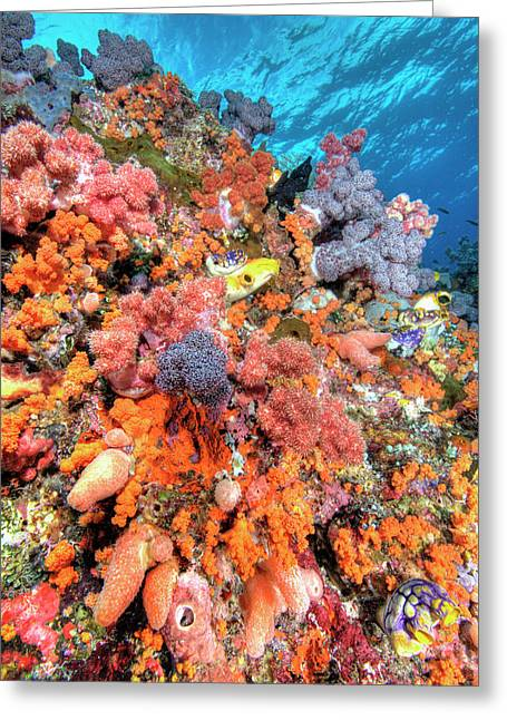 Various Species Of Soft Corals Greeting Card