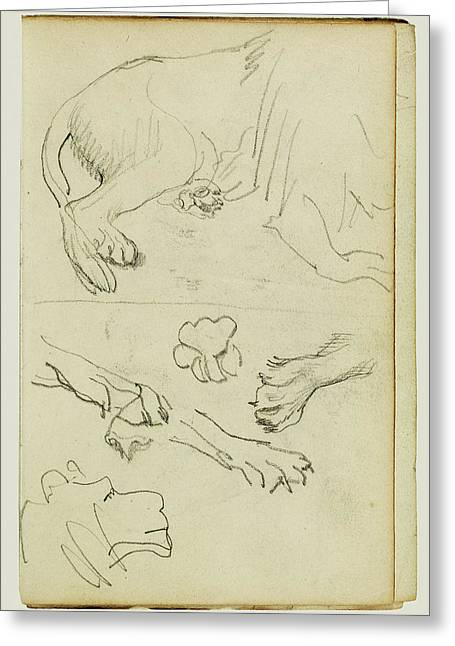 Various Studies Of Lion Leg, Paws And Head Théodore Greeting Card