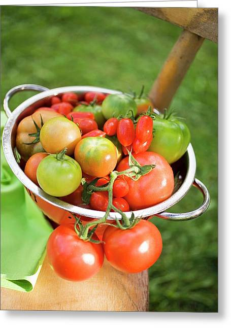 Various Types Of Tomatoes In Colander On Chair Out Of Doors Greeting Card