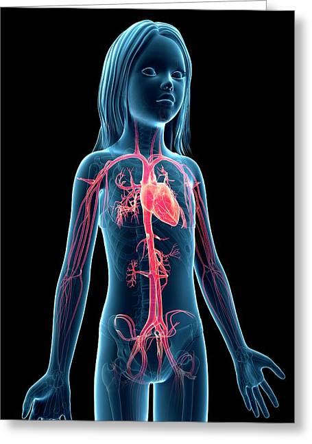 Vascular System Of Girl Greeting Card by Sebastian Kaulitzki
