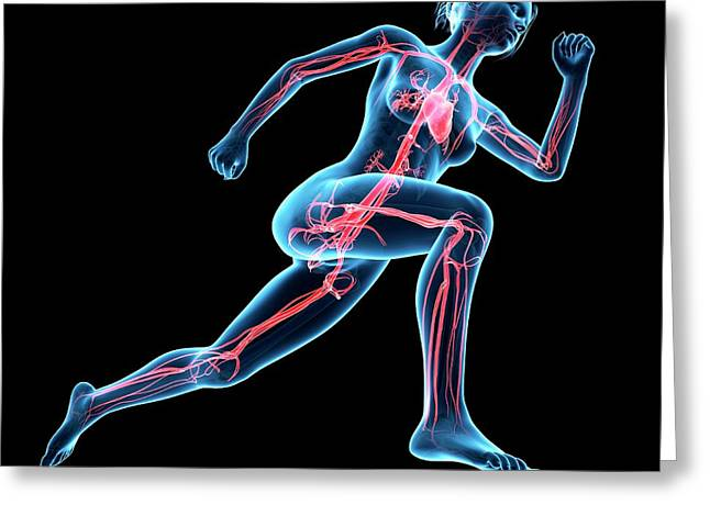 Vascular System Of Jogger Greeting Card