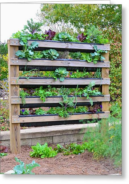 Vegetable Garden 2 Greeting Card by Lanjee Chee