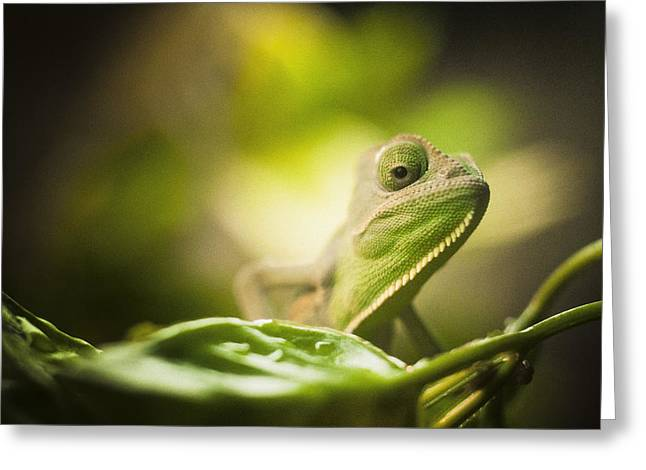 Veiled Chameleon Is Watching You Greeting Card